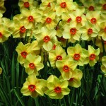 SAVE THE DATE: HPSW BULB SALE - OCTOBER 11th from 10 to 2pm