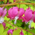 Spring Plant Sale – SundayApril 19th, 10am – 2pm CUH