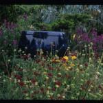 Pot with Knautia macedonica; Dragonfly Farms Nursery