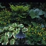 Hosta, Corydalis, Podophyllum pleianthum; Neff Design