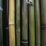 Bamboo Detail